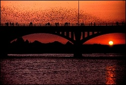 Bats_Congress Ave bridge