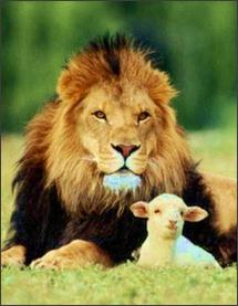 March lion lamb (2)