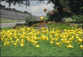 Joanna L. Castillo: Yellow flamingos