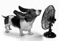 Basset with fan