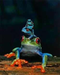 Frogs from Art-dot-com