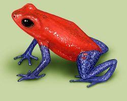 Colorful frog via FrogWorld-dot-net