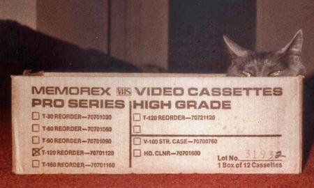 Cat lazing in a box2