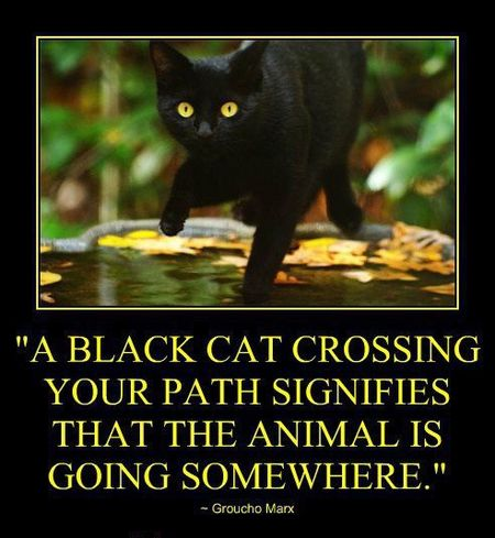 Black cat quote from Groucho Marx