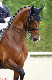 Dressage horse photo by Somogyvan_iStock-9823696
