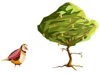 Partridge in a pear tree_PNC