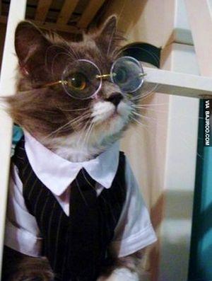 Business Cat via Bajiroo