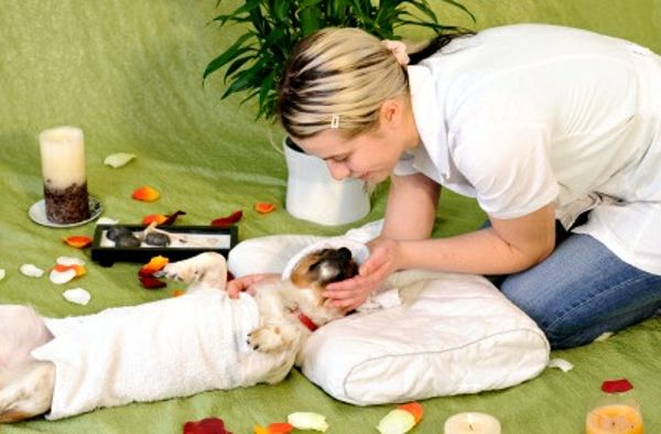 Extremely-pampered-pet-massage-831589625-mar-20-2012-600x394_Cha-Cha