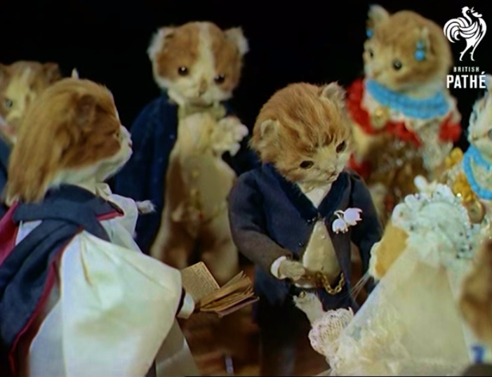 Taxidermy kitten wedding_Pathe News video screenshot