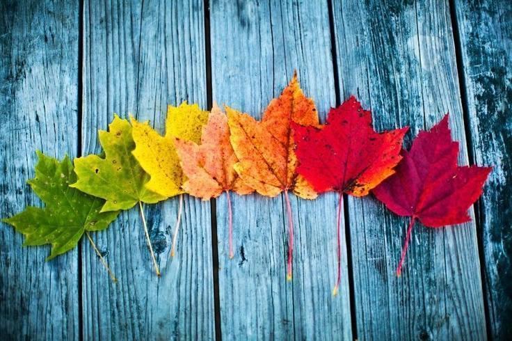 Leaf seasonal progression