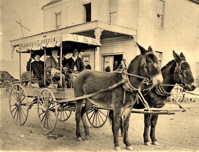 Plainview-to-Lubbock Texas mule mail service circa 1907 via Traces of Texas