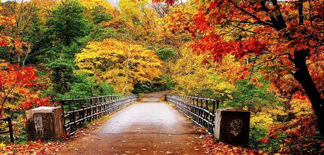 Autumn wallpaper by Fanpop_autumn-35867750-1280-800
