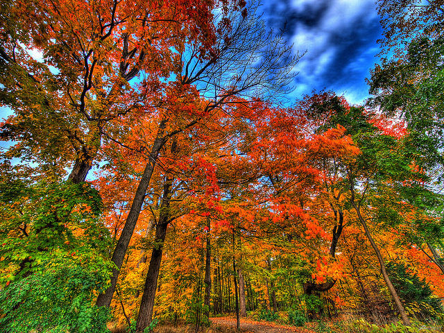 Autumn falls by Paul Bica via Flickr Creative Commons