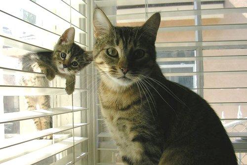 Cat kitten all the same