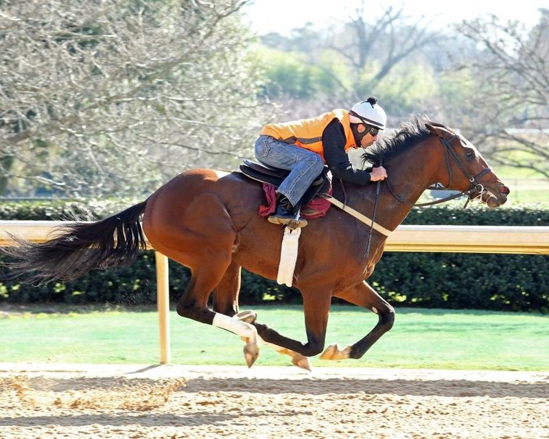 Suddenbreakingnews getting a workout in March