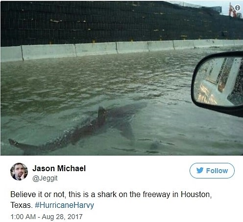 Fake shark in flooded Houston street_Jeggit on Twitter