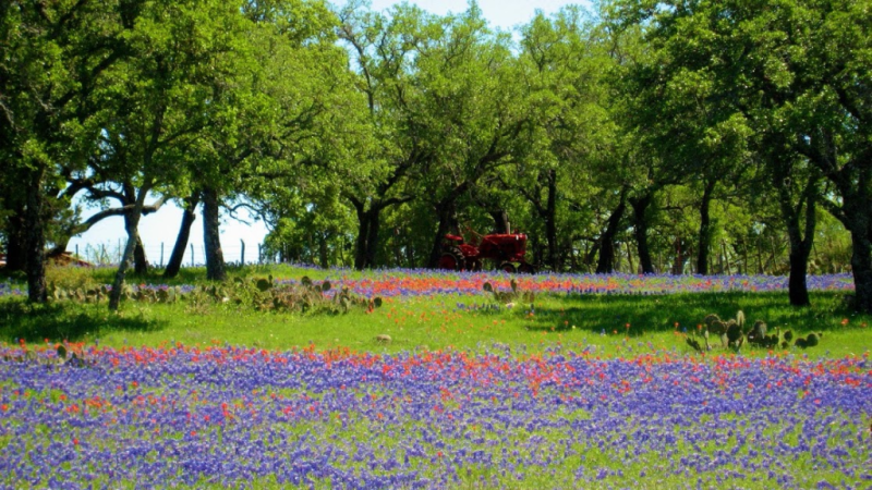 Hill Country wildflowers and tractor 2016