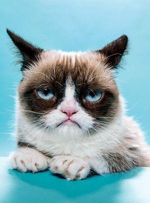 Grumpy cat_560