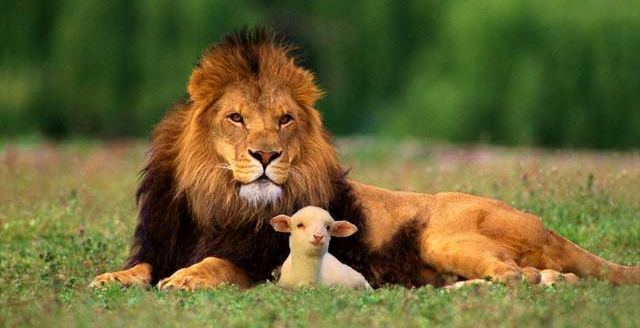 Lion-and-lamb-March