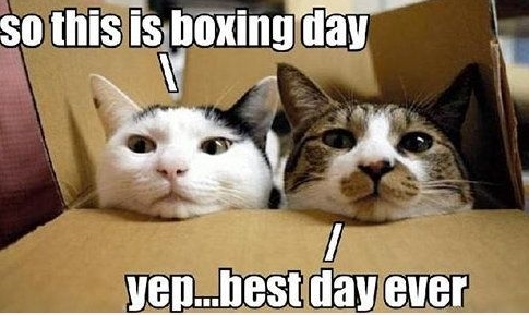 Cats enjoying boxing day_no edging