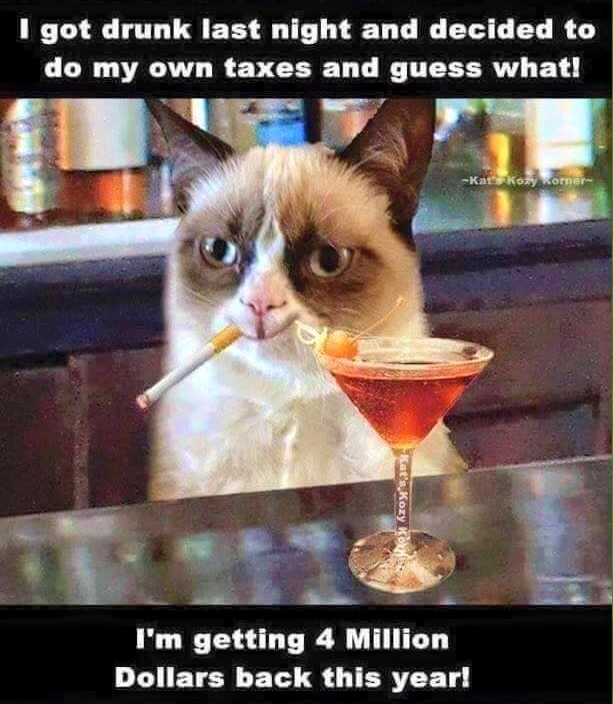 Grumpy cat tax refund