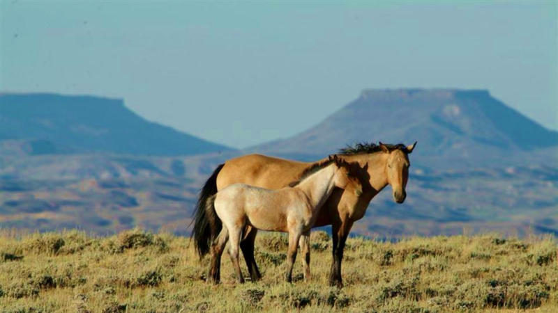 Wyoming horses_Flaming Gorge River Basin Scenic Highway_Travel Wyoming