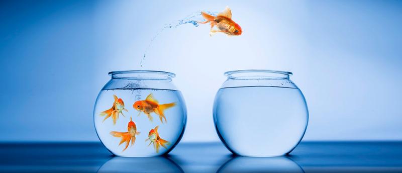 Serial-entrepreneur-goldfish-leap