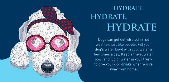 Dog keep cool summer tips_hydrate hydrate hydrate