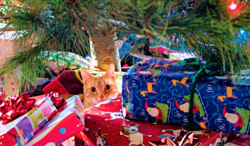 Truman the cat among Christmas presents_Shawn Kinkade Flickr CC