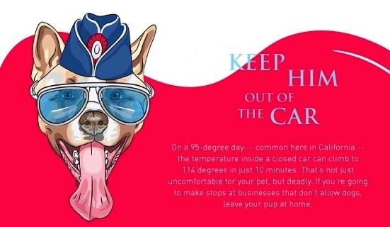 Dog keep cool summer tips_no car