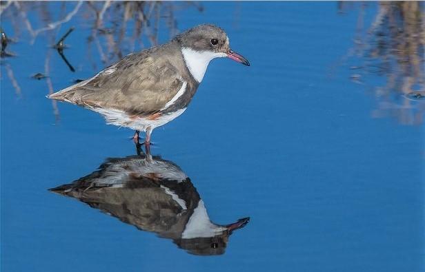 Wading bird_I Am birdsaspoetry via Flickr CC