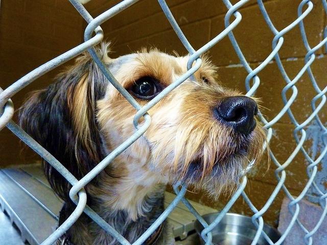 Dog in animal shelter_Dave Cooper via Flickr