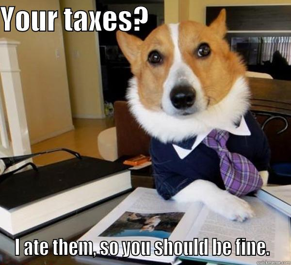 Dog ate my taxes