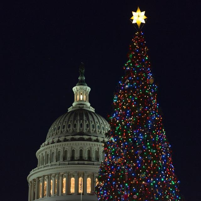 US Capitol and Christmas tree