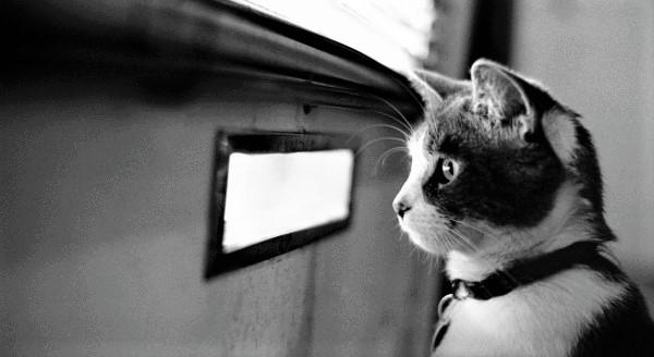 Waiting-cat_00446090-600x338