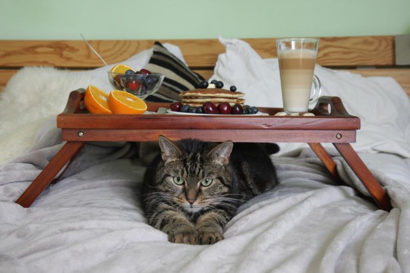 Tabby-breakfast-in-bed_pexels-milda-puga-4862597