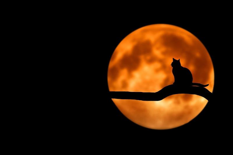 Cat silhouetted against full orange moon_Bessi via Pixabay