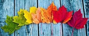 Leaf seasonal progression in post insert divider-small