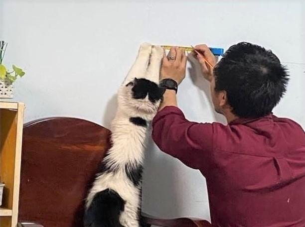 Cat helping hang art_arthandlermag Instagram