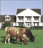 Texas_house_with_cattle_3