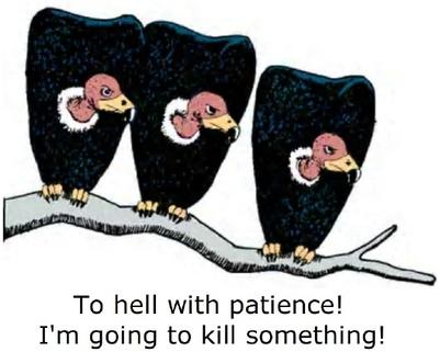 Vulture_no_patience_2