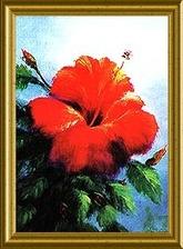 Hibiscus_framed