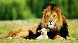 Lion and lamb; click image for the Farmer's Almanac take on this March saying
