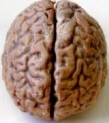 Human_brain_2_2