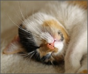 Calico_sleeping_2