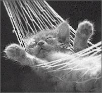 Cat_hammock_2