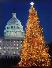 Capitol_christmas_tree1_2