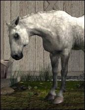 Old_gray_mare_burpee_2